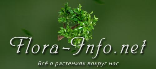 Луковичные цветы для посадки весной. 6 луковичных и клубневых цветов для весенней посадки