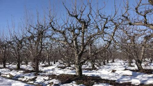 Готовим деревья к зиме. Как подготовить к зиме молодые плодовые деревья