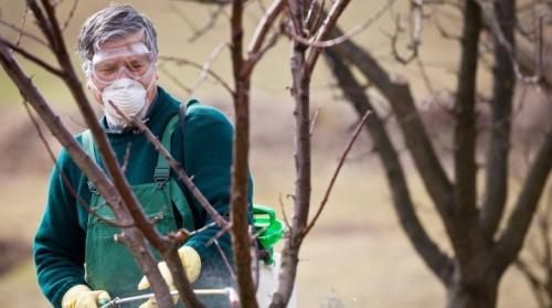 Карбамид мочевина, как средство борьбы с болезнями растений. Осенняя обработка растений мочевиной