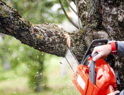 Подготовка садовых деревьев и кустарников к зиме. Подготовка плодовых деревьев к зиме