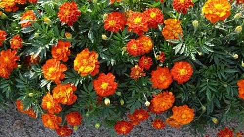 Цветы октября. Цветущий октябрь - последние отблески лета