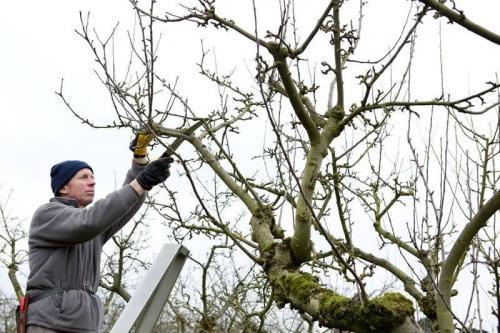 Подготовка к зиме плодовых деревьев и кустарников. Как подготовить плодовые деревья и кустарники к зиме