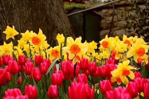 Когда садить луковичные цветы осенью. Когда и как следует сажать луковичные цветы осенью