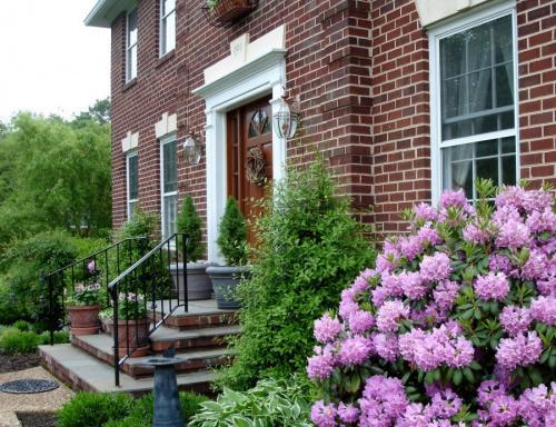 Садовые многолетники с декоративными листьями. Декоративные растения — лучшие и самые популярные растения для сада (115 фото)