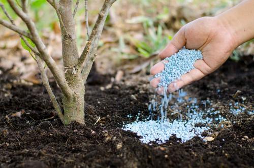 Фосфорные удобрения водорастворимые. Водорастворимые удобрения