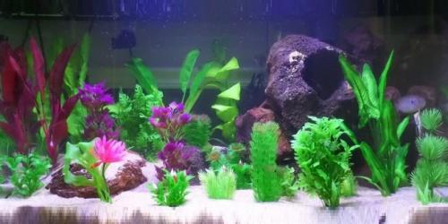 Аквариум растения искусственные или живые. Аквариум по размерам Размеры аквариума с расчетом стоимости для сборки своими руками, по чертежам из личного опыта!