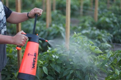 Монофосфат калия для томатов. Польза