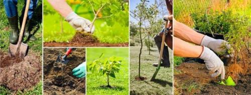 Когда осенью высаживать саженцы плодовых деревьев. Когда сажать деревья и кустарники осенью?